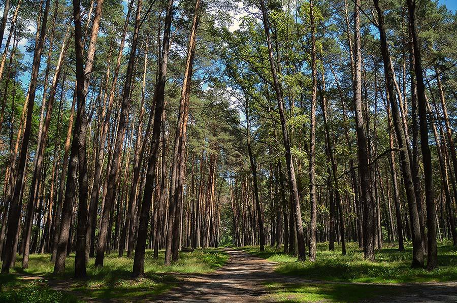 "фото ""В лесу."" метки: природа, пейзаж, лес"