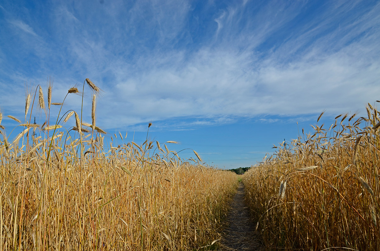 "photo ""***"" tags: landscape, summer"