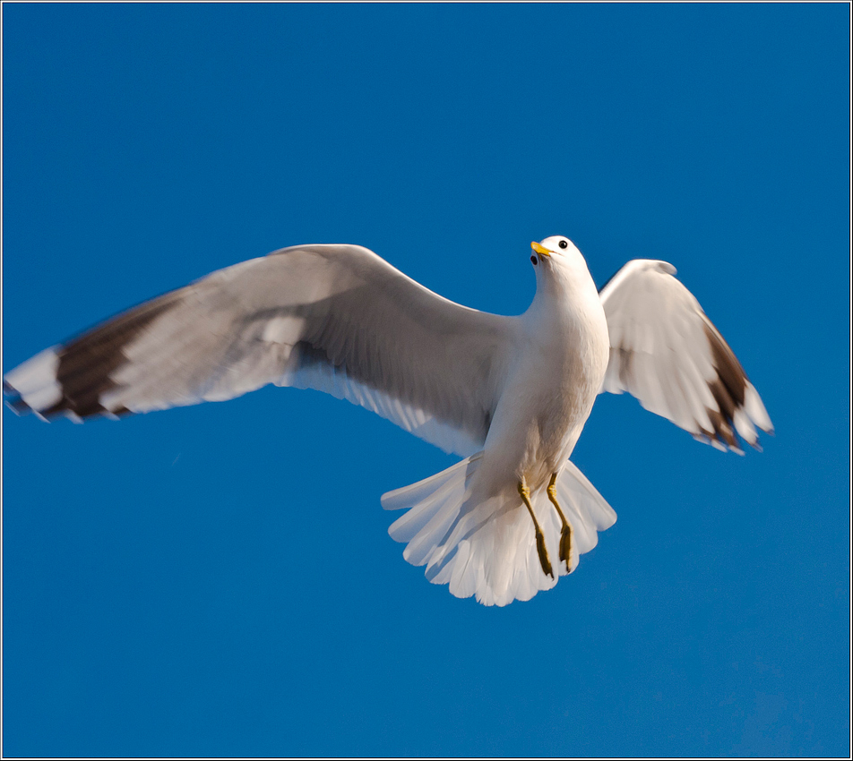 "photo ""I fly a whole ... :-)"" tags: nature, wild animals"