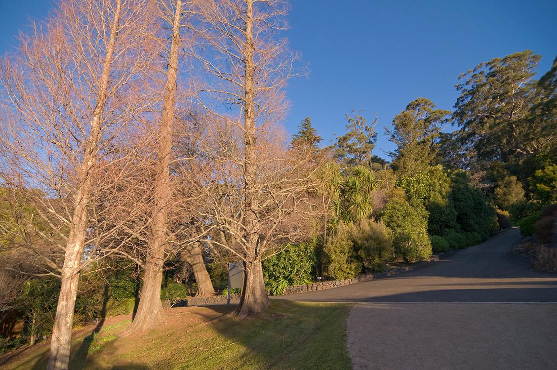 """фото """"Trio"""" метки: пейзаж, лес, осень"""