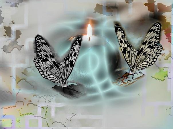 """photo """"butterflies"""" tags: digital art,"""