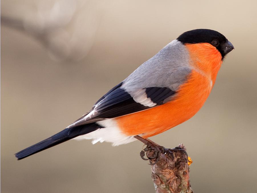 """фото """"Вспоминая прошедшую зиму"""" метки: природа, дикие животные"""