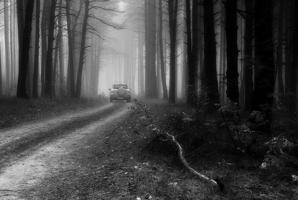 "фото ""В лесу"" метки: пейзаж, черно-белые, лес"