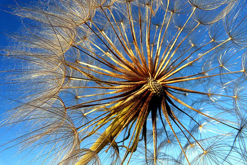 """фото """"***"""" метки: природа, макро и крупный план, лето, цветы"""