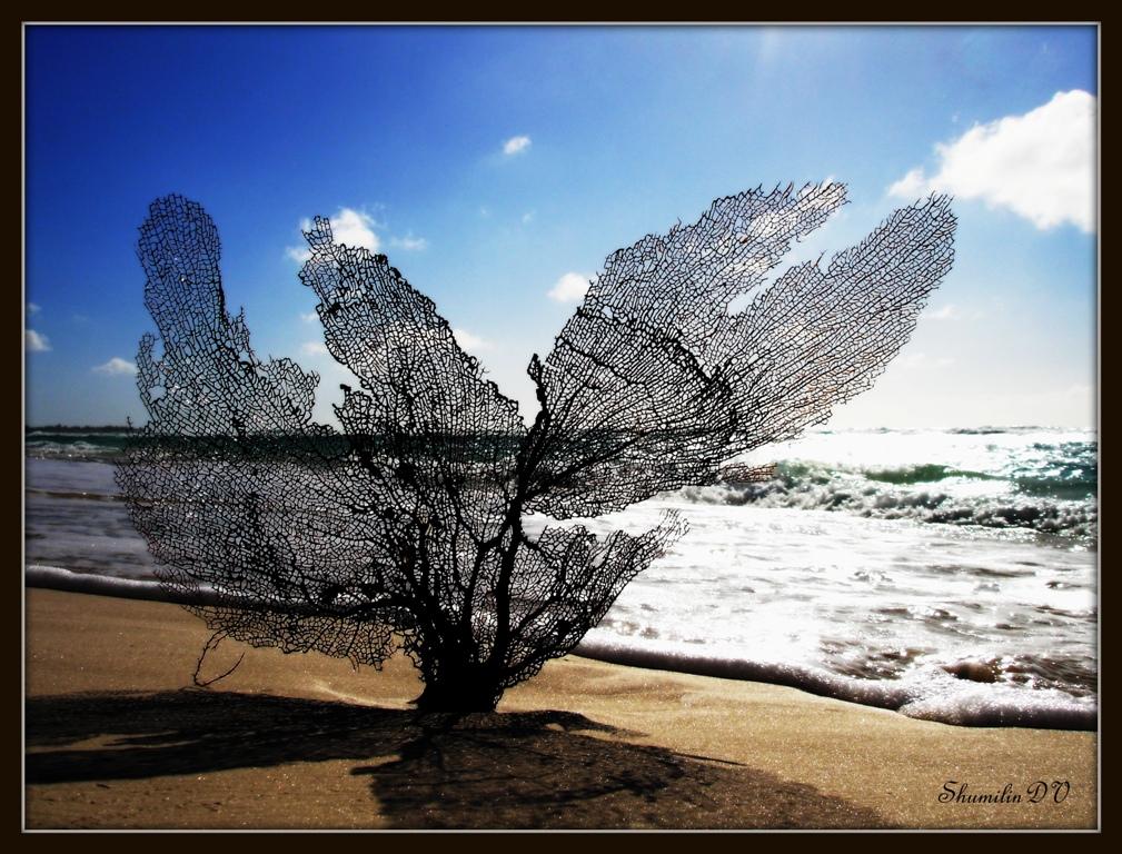 """фото """"На острове"""" метки: пейзаж,"""