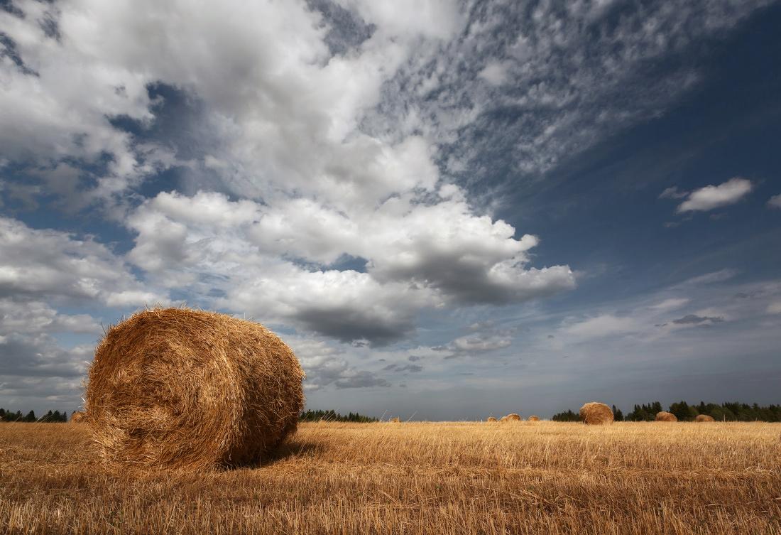"""фото """"Поле и облака"""" метки: пейзаж, лес, лето, облака, осень, поле, рулоны, сено, трава"""