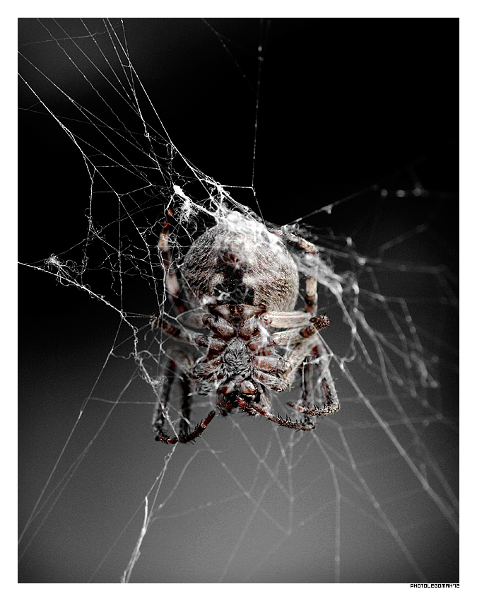 """photo """"web Creator"""" tags: macro and close-up, spider, web, паук, паутина"""