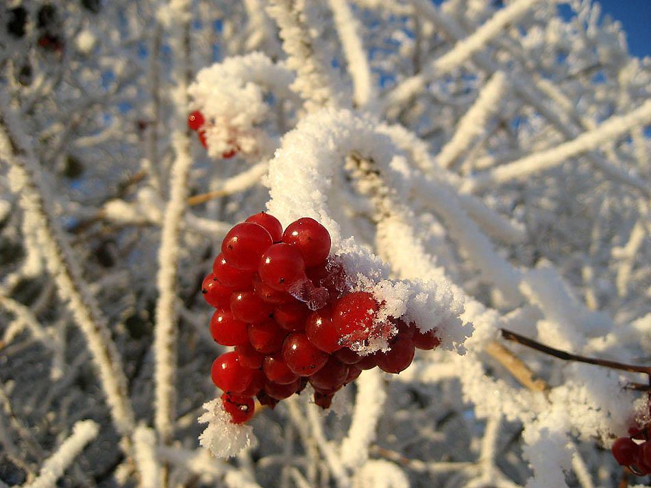 """фото """"Frost"""" метки: природа, зима"""