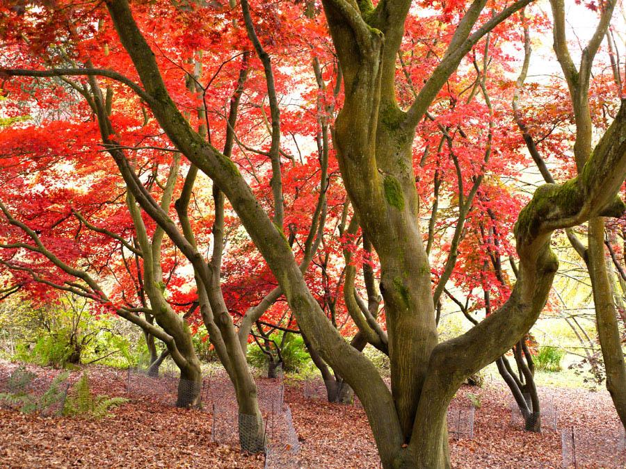 """фото """"Red"""" метки: пейзаж, лес, осень"""
