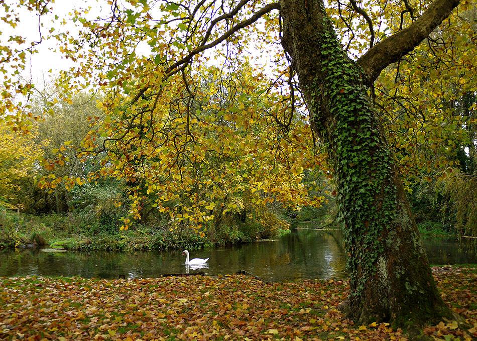"фото ""Autumn3"" метки: пейзаж, вода, осень, птица"