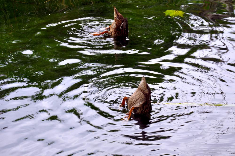 """фото """"синхронное плавание"""" метки: , Прага, зоопарк"""
