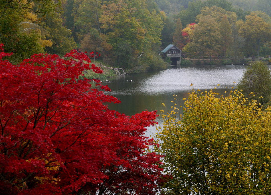 "photo ""Red tree"" tags: landscape, autumn, forest, water"