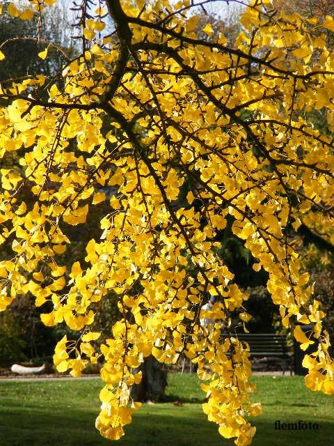 """фото """"Autumn"""" метки: природа,"""