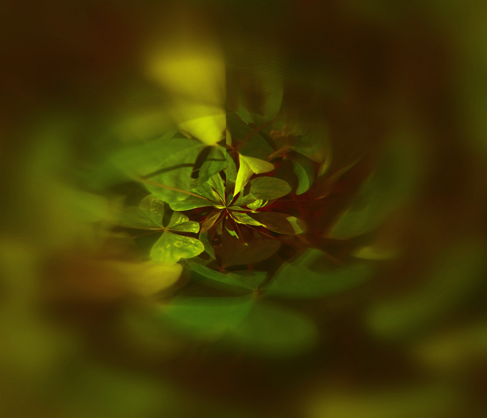 """фото """"Abstract, Nature"""" метки: абстракция,"""