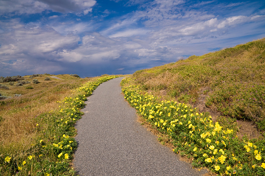 "photo ""***"" tags: landscape, clouds, flowers, nature, path, sky, summer"