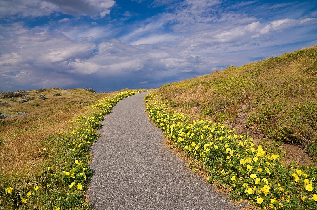 """фото """"Тропа в небо"""" метки: пейзаж, nature, path, summer, небо, облака, цветы"""