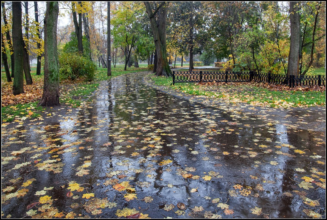 нас фото дождливой осени в парке даже