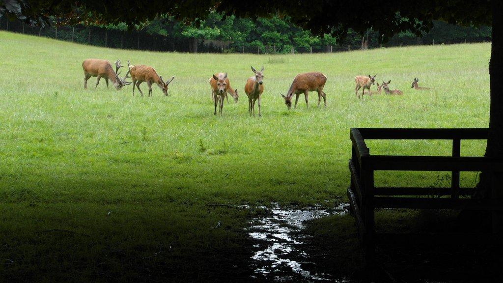 """фото """"Красные олени"""" метки: пейзаж, Белый замок., Шотландия"""