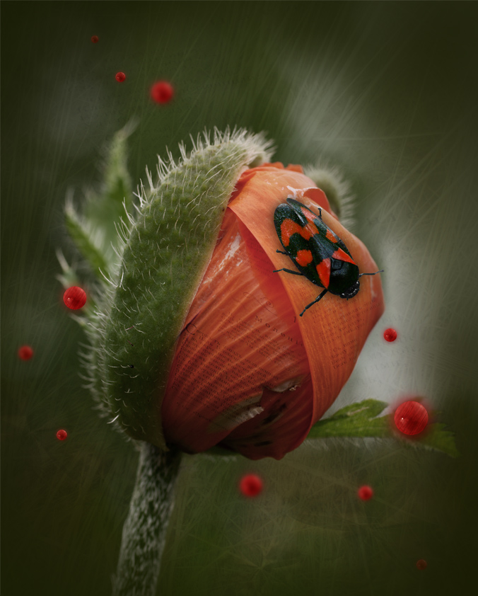 "фото ""Феромоны"" метки: природа, фотомонтаж,"