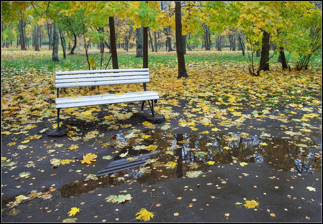 "photo ""in autumn park 2"" tags: city, landscape, Moscow, autumn, park, rain"