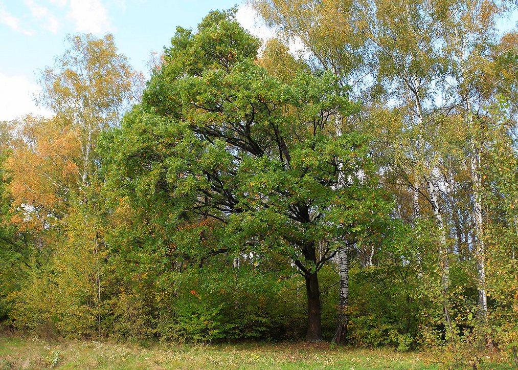 """photo """"Alone"""" tags: nature, autumn"""