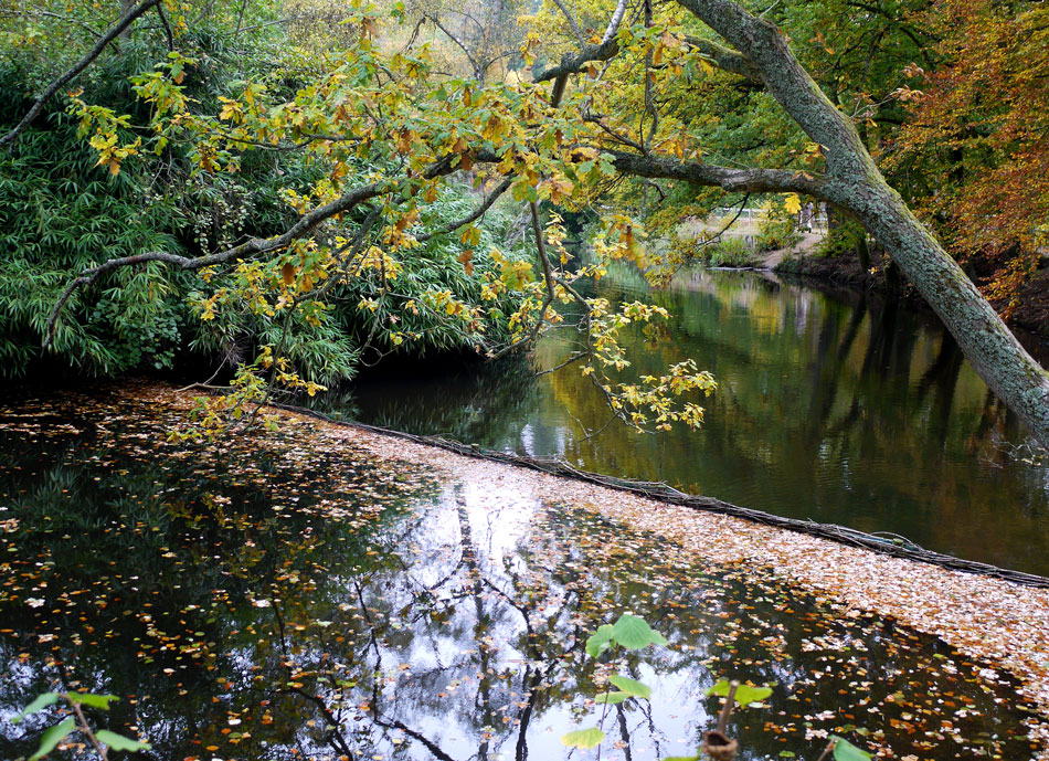"photo ""***"" tags: landscape, autumn, forest, water"