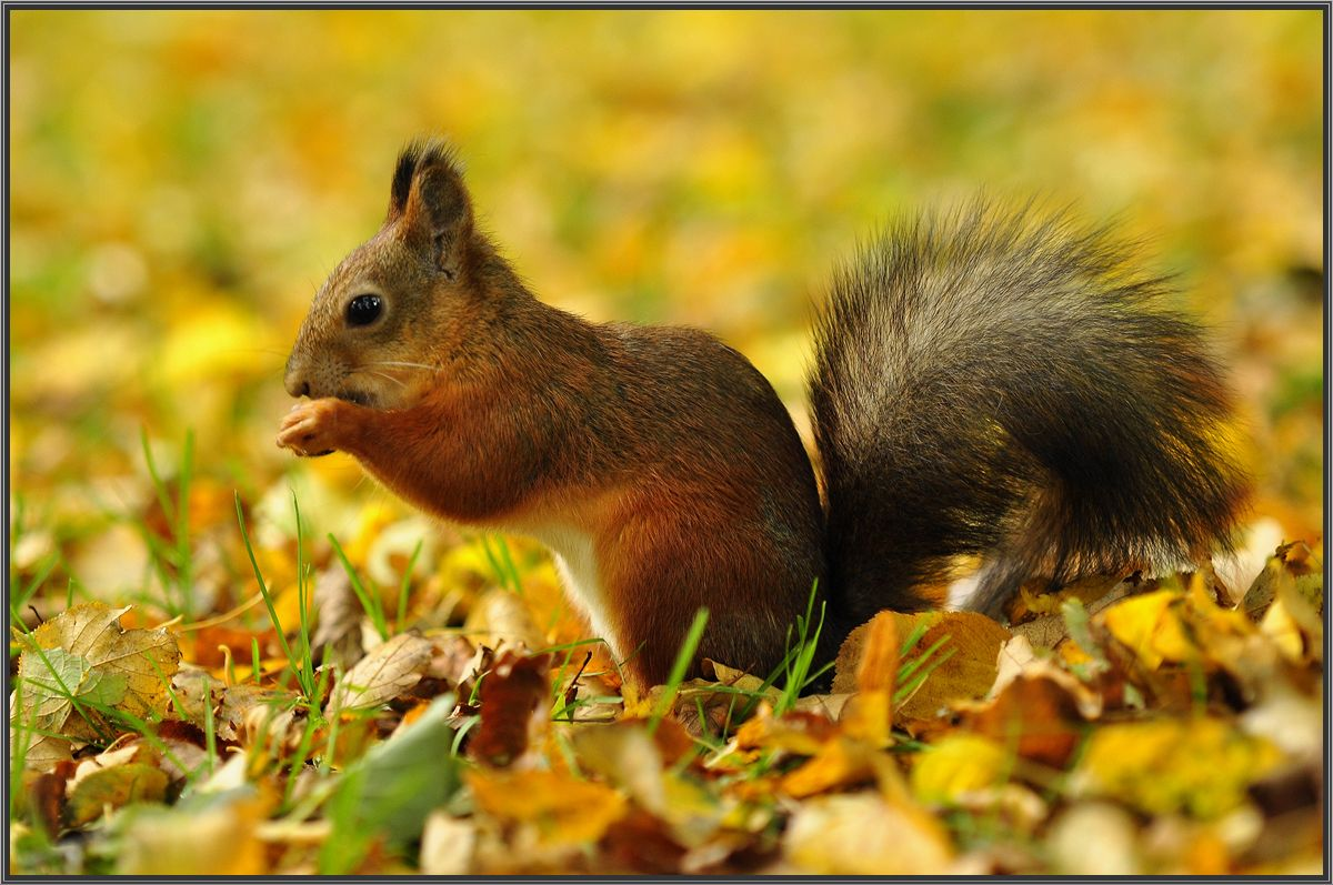 "photo ""***"" tags: nature, squirrel"