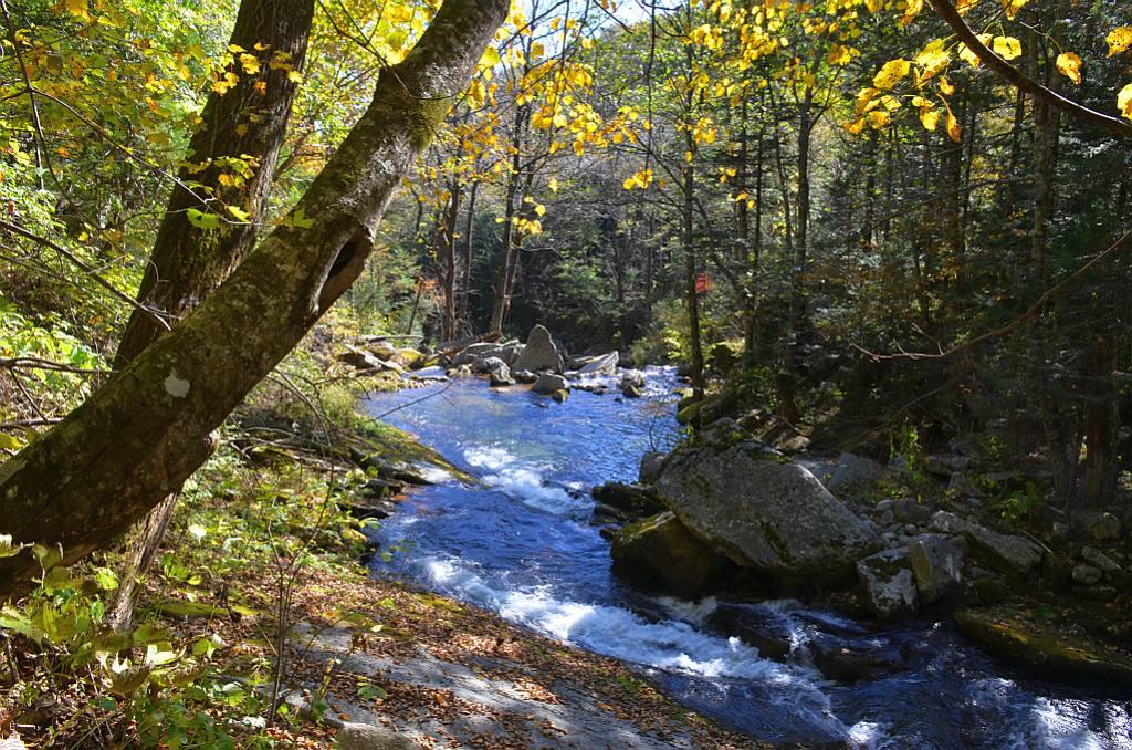 """фото """"Желтоглазая осень"""" метки: пейзаж,"""