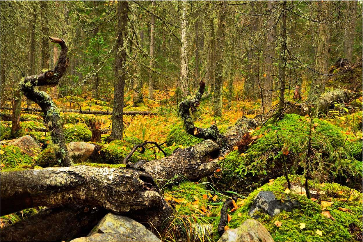 """фото """"Царство Берендея"""" метки: пейзаж, путешествия, природа, Иремель, горы, камень, корни, лес, мох, осень, сентябрь"""