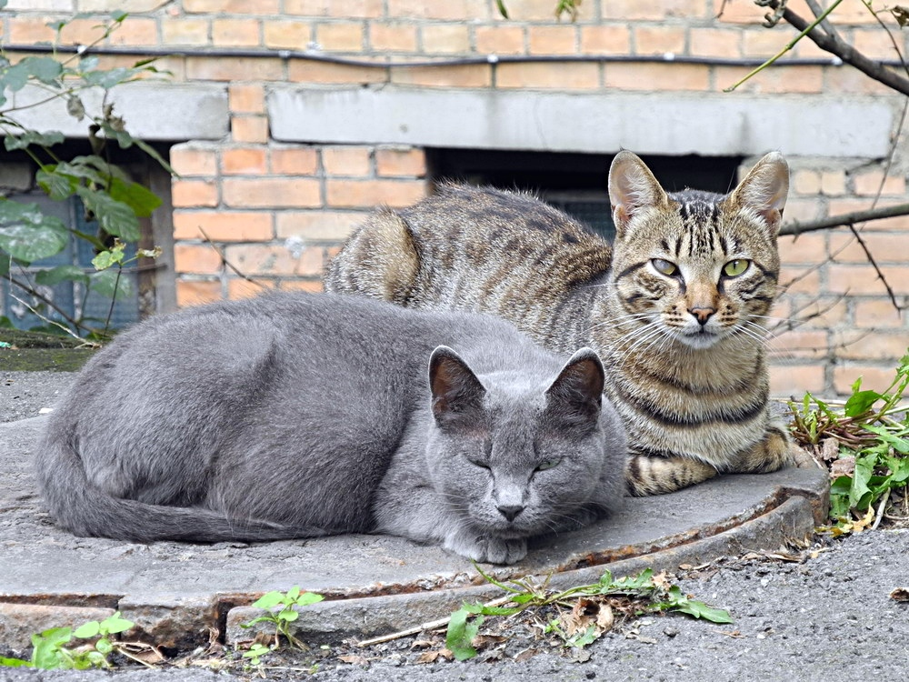 "фото ""Бродяжки"" метки: природа, Владивосток, бездомные кошки"