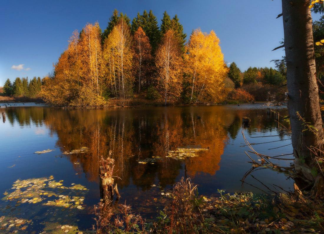 "фото ""Осенний островок"" метки: пейзаж, дерево, краски, лес, лист, озеро, осень, отражения"