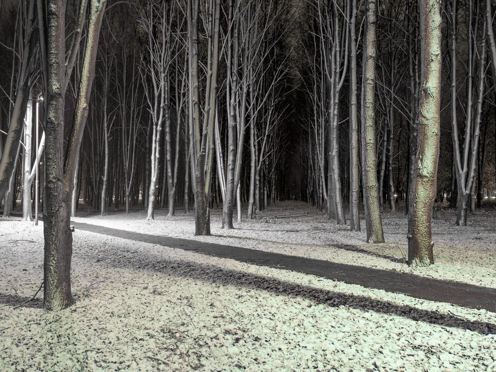 """фото """"Первый снег."""" метки: город,"""