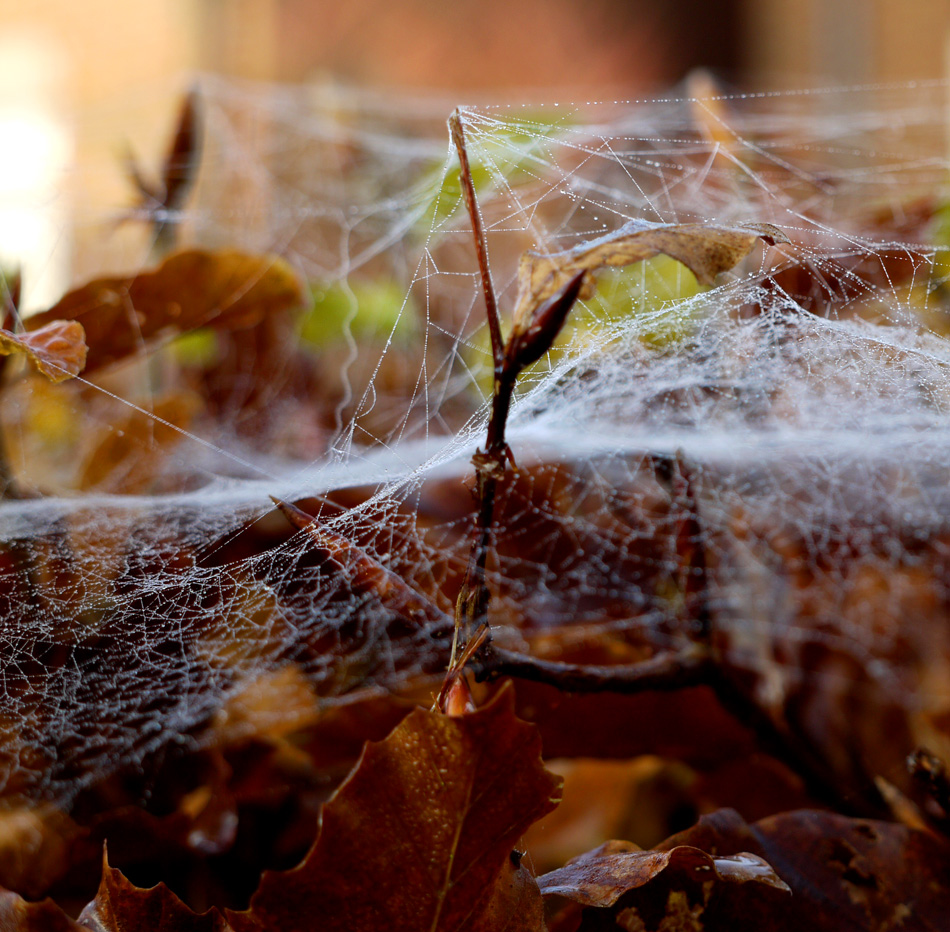 "photo ""Cobweb"" tags: macro and close-up, autumn"