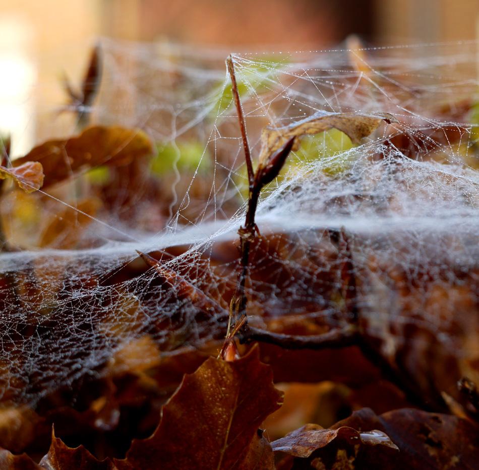 """фото """"Cobweb"""" метки: макро и крупный план, осень"""