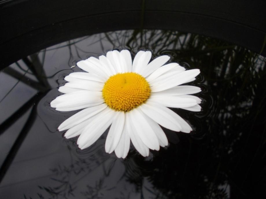 """фото """"Капризный июльский цветок"""" метки: ,"""