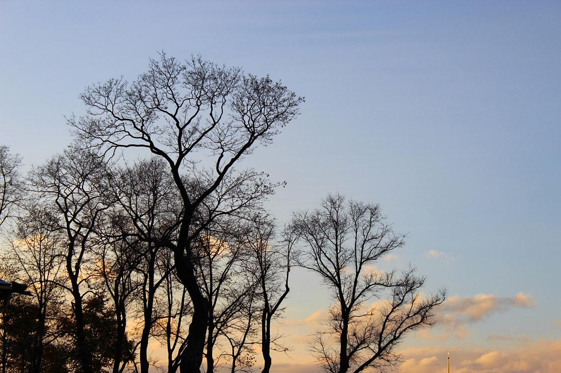 """фото """"Силуэты Летнего сада"""" метки: пейзаж, город, Saint-Petersburg, Санкт-Петербург, закат"""