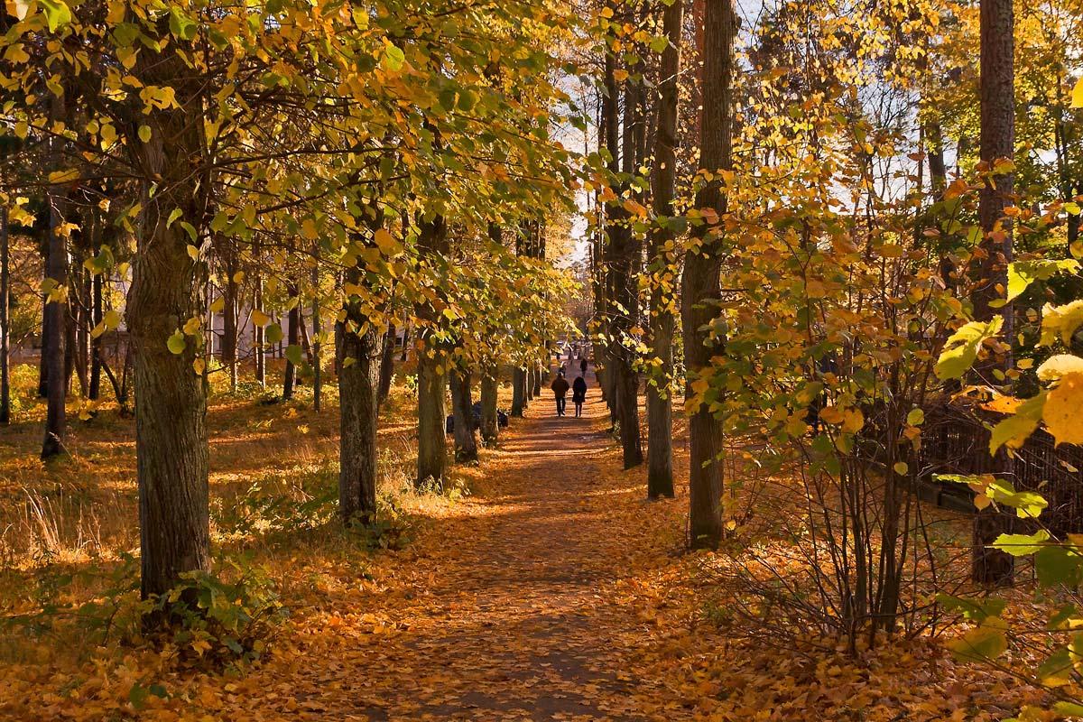 """фото """"Осенняя аллея..."""" метки: пейзаж, город, лес, осень"""