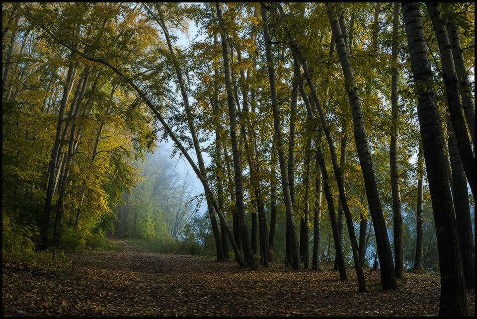 """фото """"Утро в лесу..."""" метки: ,"""