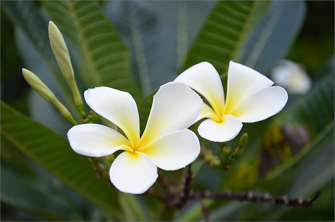 "фото ""Лилавади"" метки: природа, цветы"