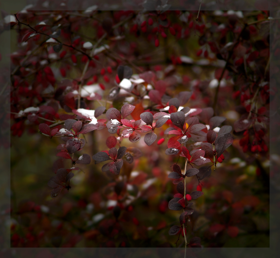 "photo ""***"" tags: nature, autumn"