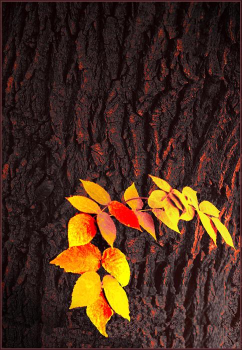 """фото """"вспыхнула осень"""" метки: природа,"""