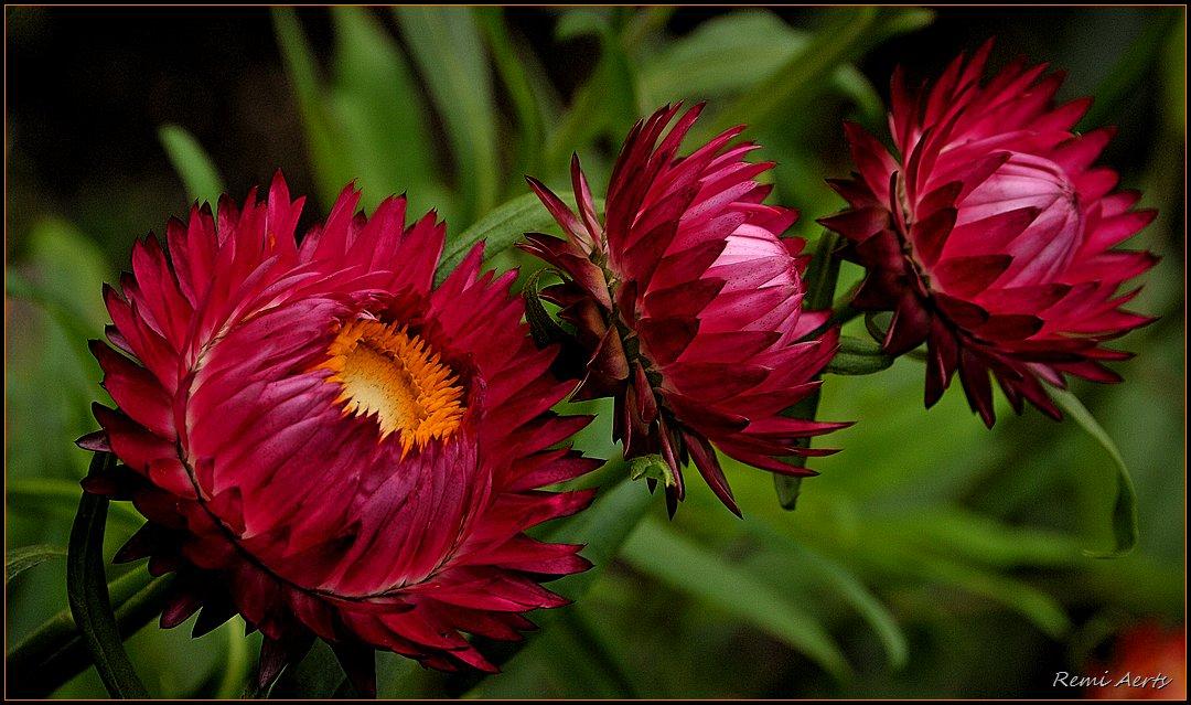 "photo ""trio"" tags: nature, macro and close-up,"