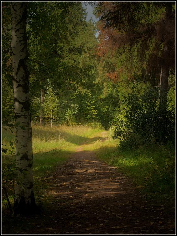 """фото """"По дороге в осень..."""" метки: пейзаж, природа, лес, лето, растение"""