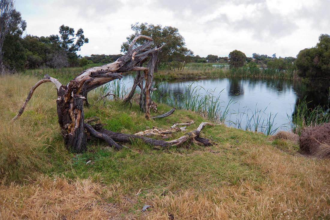"""фото """"После бури"""" метки: пейзаж, rain, tree, вода, озеро"""