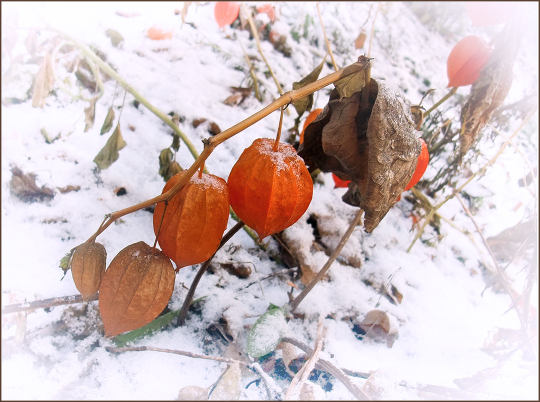"""фото """"***"""" метки: природа, осень, цветы"""