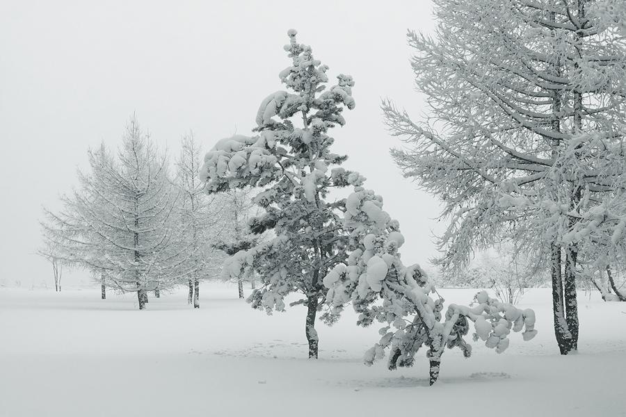 """фото """"белое безмолвие"""" метки: пейзаж, черно-белые,"""
