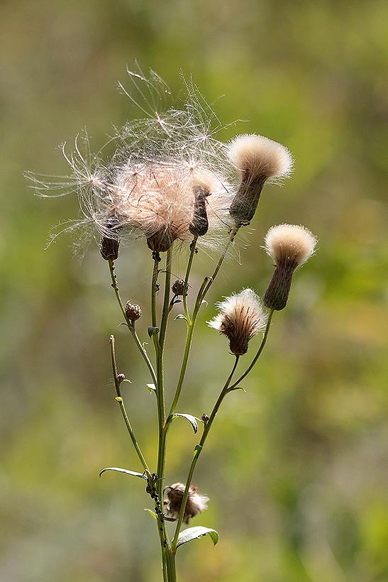 """фото """"осень жизни"""" метки: природа, осень, цветы"""