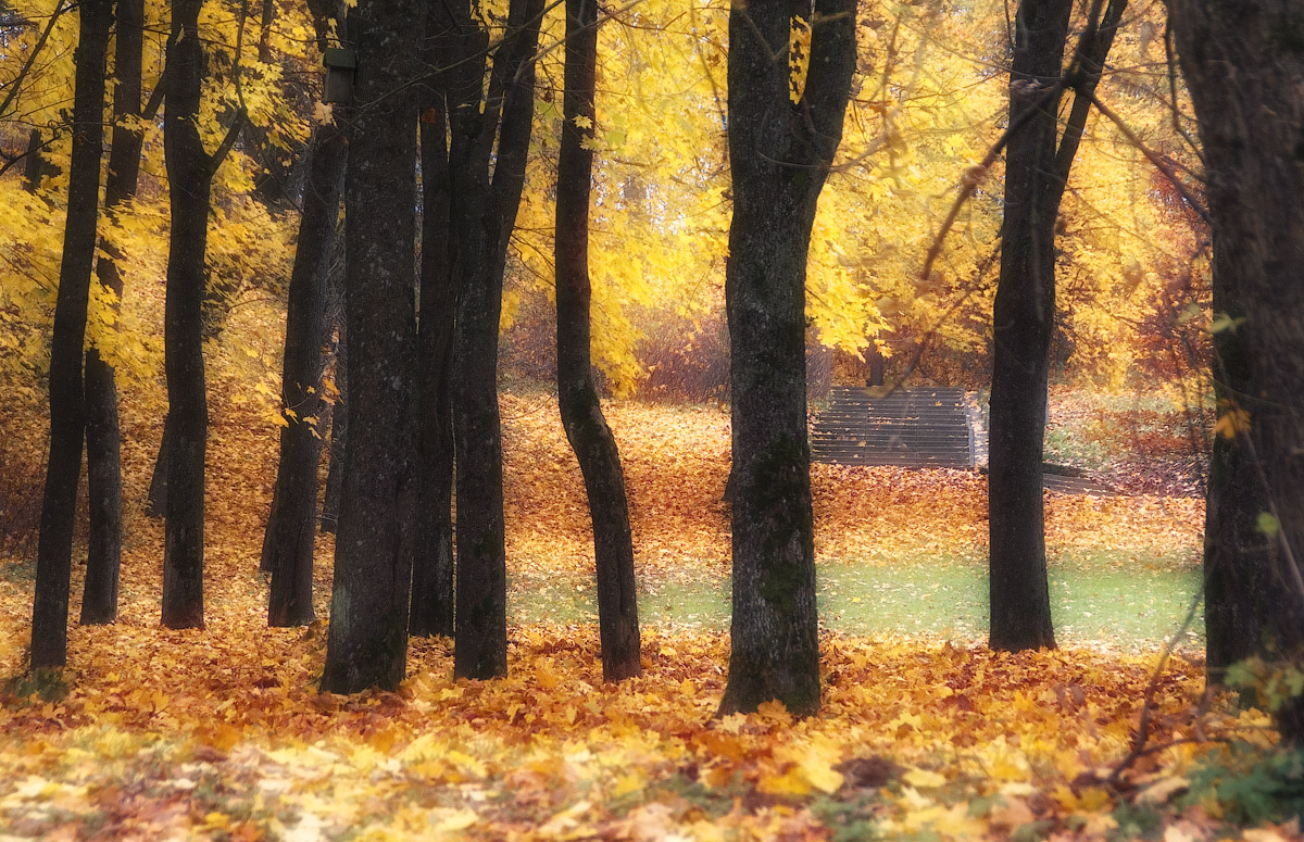 "photo ""Guards of autumn"" tags: ,"