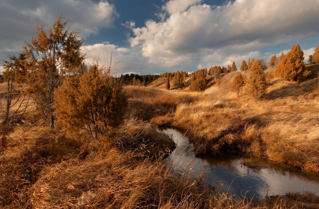 "фото ""Рыжая осенняя речка"" метки: пейзаж, Речка, деревья. лес, краски, облака, осень, трава"