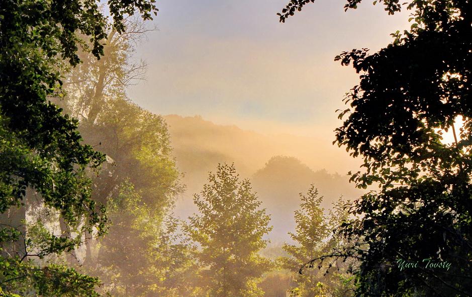 """фото """"Ежик в тумане"""" метки: пейзаж,"""